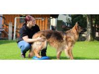 Reha Training für Hunde - K9 Rehabilitation