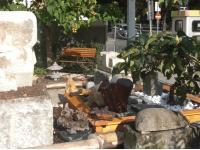 arteum-Skulpturengarten (Ausschnitt)