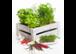 Frische Kräuter & Gemüsepflanzen für Dich!