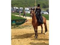 LEXA Pferdefutter Turnierwerbung
