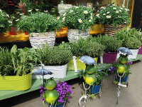 Pflanzen und Kräuter für Garten und Balkon