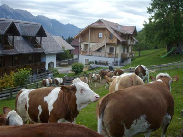 Vorschau - Foto 1 von Schönauerhof