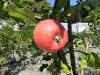 Thumbnail Maly Gartengestaltung 3