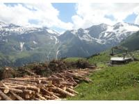 Holzarbeit im Käfertal bei Fusch/Glstr.
