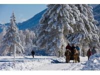 Mit dem Pferdeschlitten durch den Naturpark