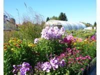 Lechner - Blütenstauden, Wasserpflanzen