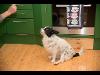 Thumbnail Auch Hunde fühle sich wohl in der Küche