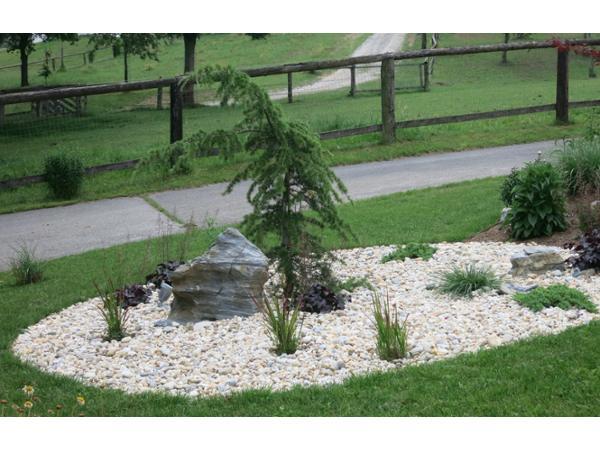 Vorschau - Pflegeleichter Kiesgarten mit Immergrünen und Gräsern