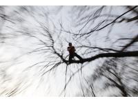 Treeworks - Christian Kollmann