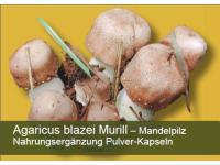 Agaricus blazei Murrill (Sonnenpilz, Mandelpilz)
