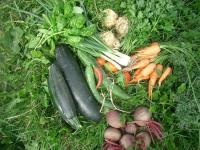 Gemüseprojekt