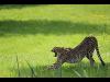 Thumbnail - Tierwelt Herberstein