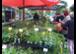 Bio-Jungpflanzenmarkt