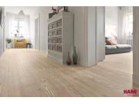 Drack Maler & Bodenleger GmbH