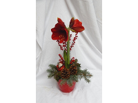Adventamaryllis