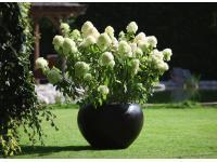 Gartenglück GartengestaltungsgesmbH