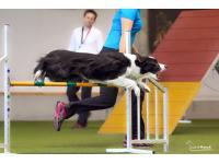 Bewegungstraining für Hunde und Welpen