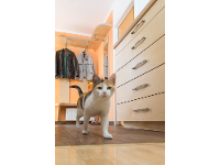 Vorzimmer mit Katze