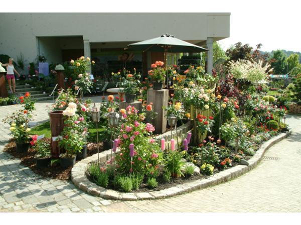 Dekorativ gestaltet - zur Rosenblüte mit 300 Sorten