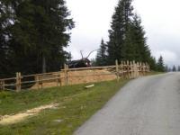 Pilz Markus Tischlermeister Holzkunst