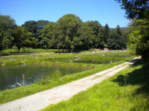MEGA Enduro Runde Graz - Schckl - Angus Trail - YouTube