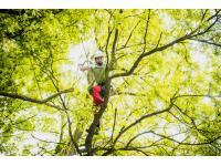 Bösch Baumpflege