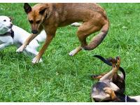 Familienhunde