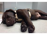 ...entspannter Patient am Untersuchungstisch!;-))