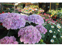 Blütenpracht vor unserem Geschäft
