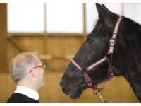 Persönlichkeitstraining mit Pferden als Spiegel