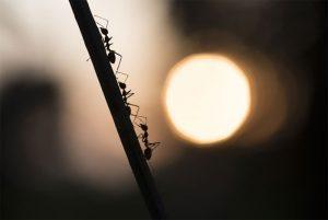 Was hilft gegen Ameisen im Haus und in der Wohnung?