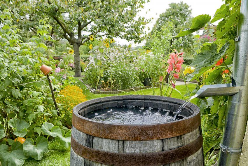 regenwassernutzung: mit regentonne geld sparen - herold.at, Gartengestaltung