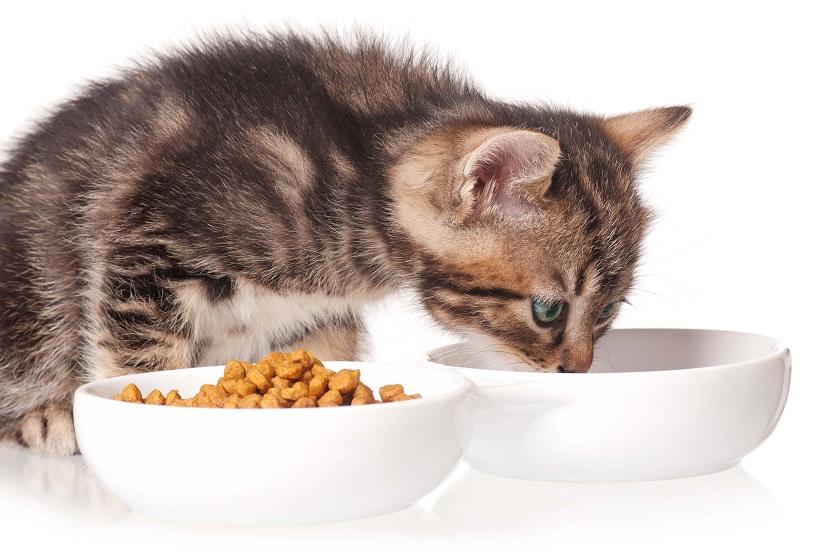 bestes katzenfutter bei nierenproblemen