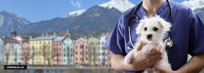 Tierarzt Notdienst Innsbruck
