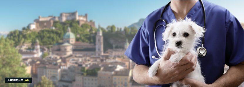 Tierarzt Notdienst Salzburg