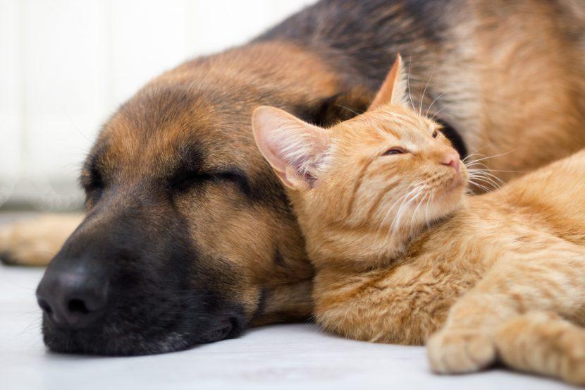 Tierbestattung und Tierbeerdigung