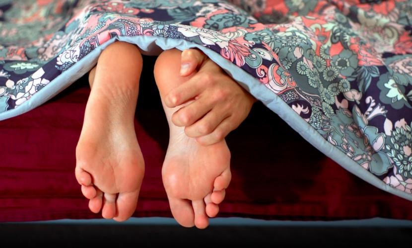 Blutsauger Bettwanzen Erkennen Und Verstecke Finden Herold