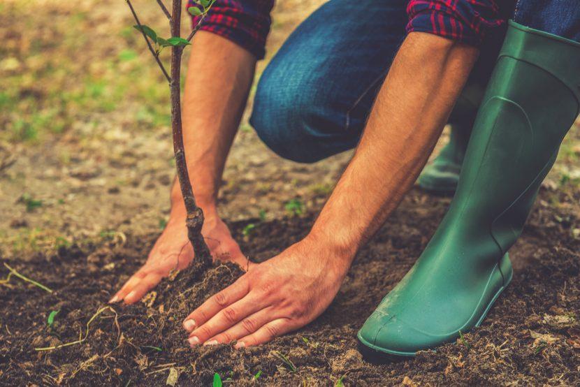 Ersatzpflanzung Wien