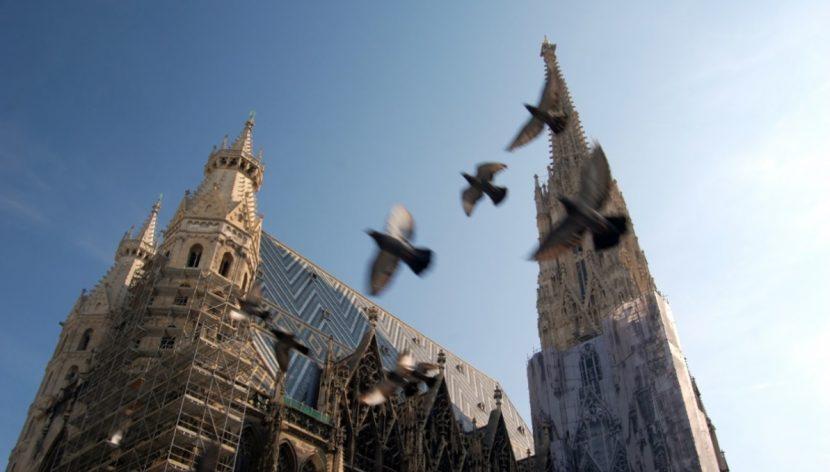 Tauben vertreiben, Taubenabwehr, Tauben töten