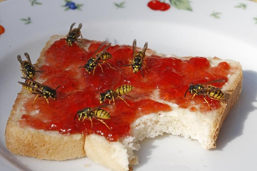 Schädlingsbekämpfung