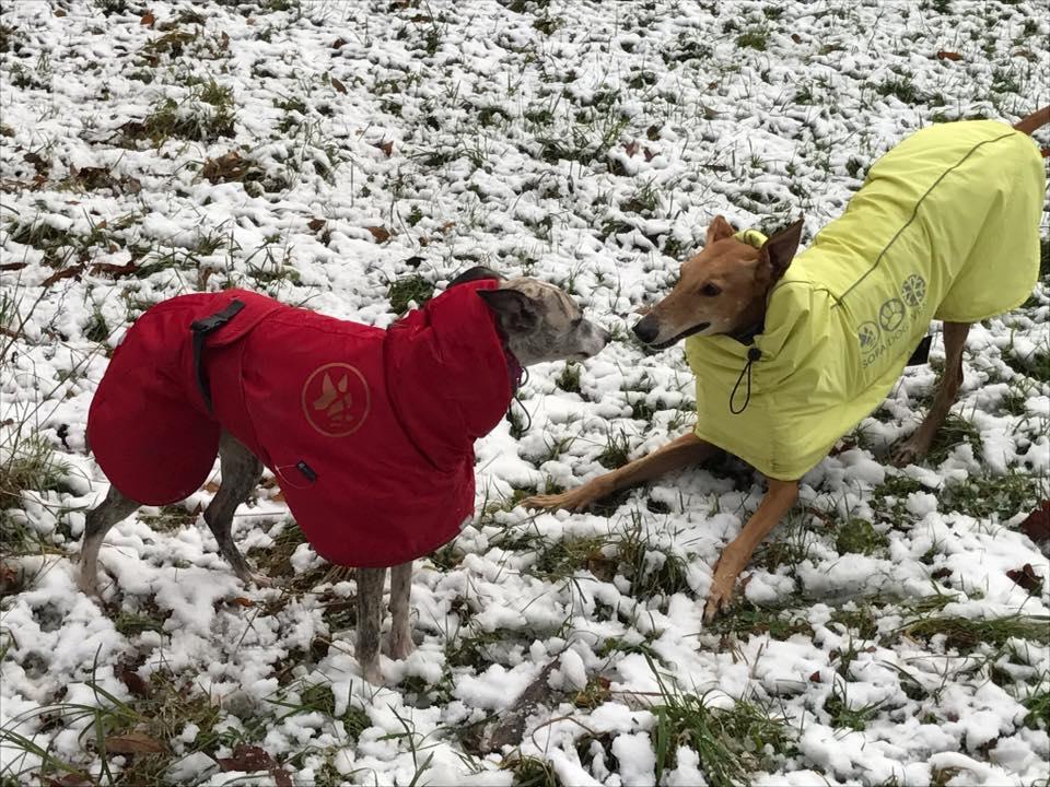 Hundebekleidung für Windhunde