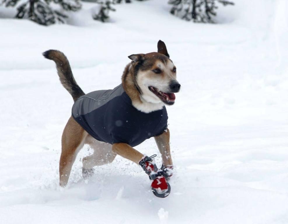 Hundebekleidung - Hundeschuhe als Schutz gegen Salz, Schnee und Eis