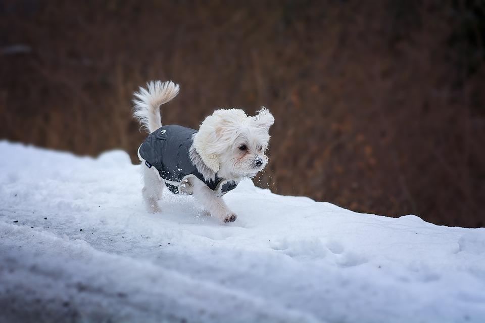 Hundebekleidung für kleine Hunde
