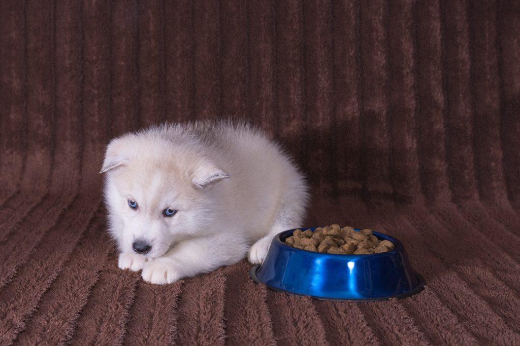 Hundeernährung