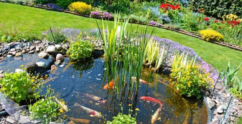 Teich Anlegen In Wenigen Schritten Zum Gartenteich  HeroldAt