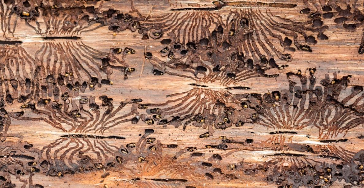 Wenn Der Wurm Drin Ist Mobel Vor Holzwurm Schutzen Herold At
