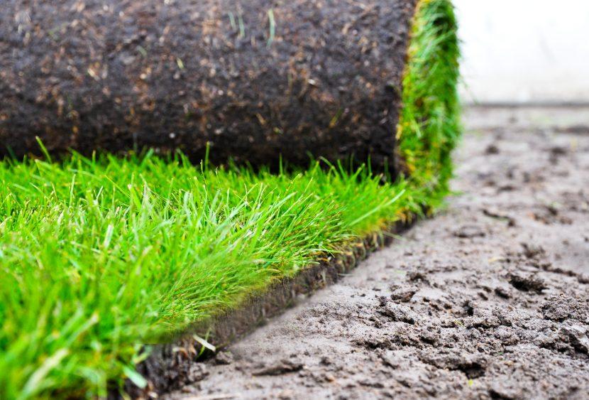 Rasen Rasenziegel Oder Fertigrasen Die Unterschiede Herold At