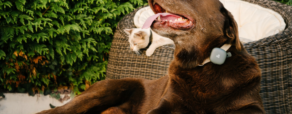GPS Tracker für Hunde und Katzen