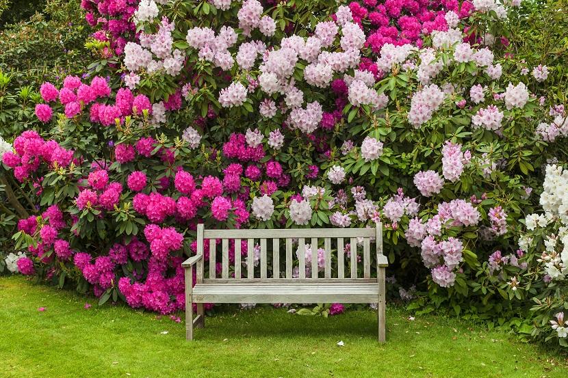 Immergrune Pflanzen Ubersicht Liste Und Pflegehinweise Herold At