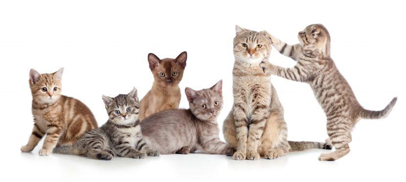 Katzenkrankheiten, Katze niest